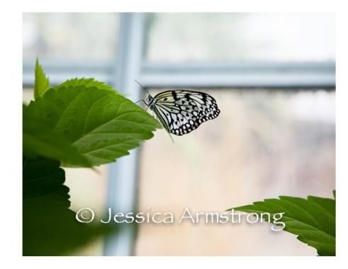 Butterflies-03