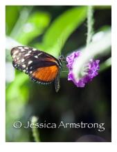 Butterflies-05