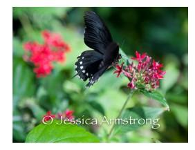 Butterflies-07