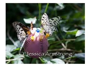 Butterflies-09