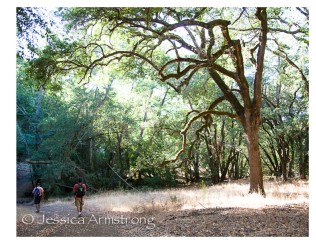 HikingWithAmericanFlags.jpg-09