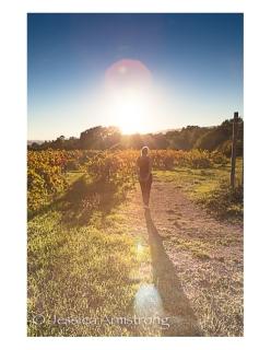 Wineyard1