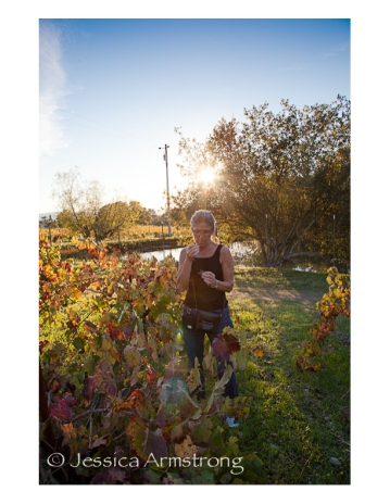 Wineyard3
