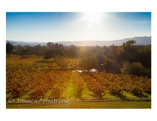 Wineyard6